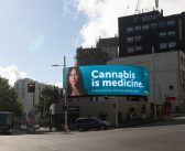 Medical rebrand for cannabis gets underway