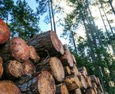 Forestry fatality was preventable – so why did it happen?